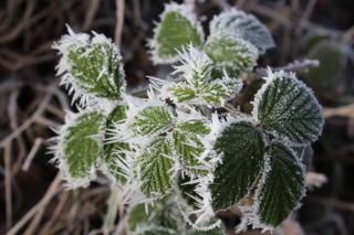 Фото: pixabay.com   «Берегите свои саженцы»: столбики термометров рухнут на 15 градусов в Приморье