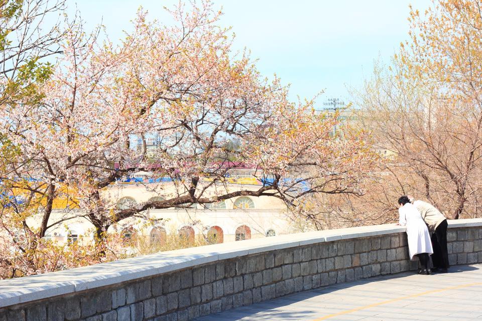 «Японский» мастер-план Владивостока не вдохновил экспертов по туризму