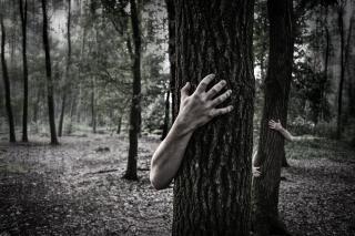 Фото: pixabay.com | Зомби на дорогах Приморья пугает местных жителей