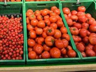 Фото: Александр Потоцкий   Назван способ значительно увеличить урожайность помидоров