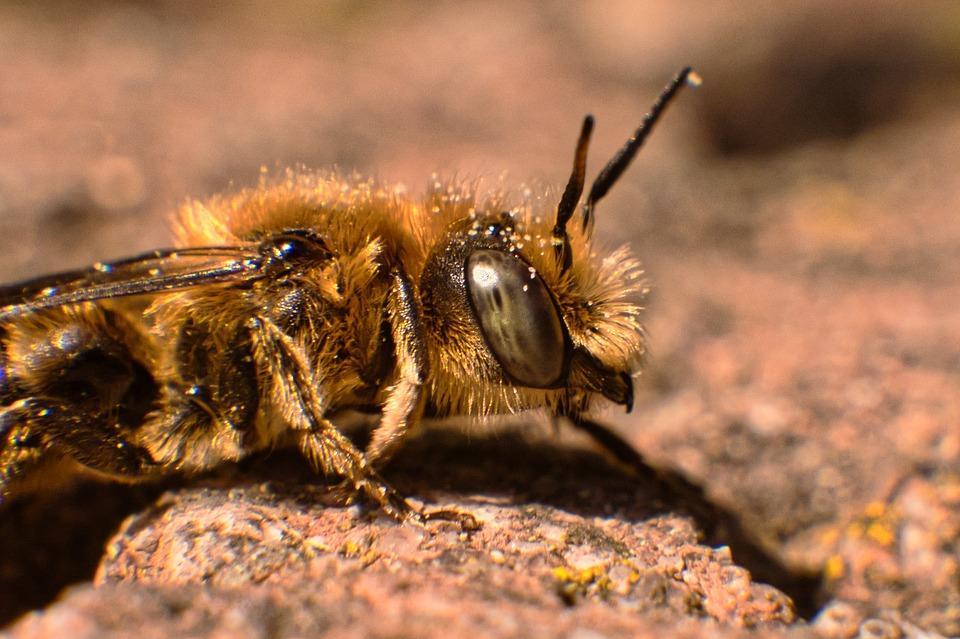 Дикие пчелы терроризировали жительницу Приморья и ее семью