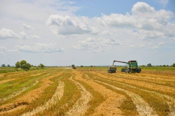 В ДВФУ нашли способ увеличения урожайности в сельском хозяйстве
