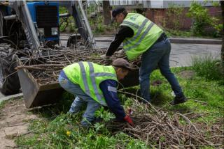 Фото: Татьяна Меель / PRIMPRESS   С начала года с улиц Владивостока вывезли 13 тысяч тонн веток