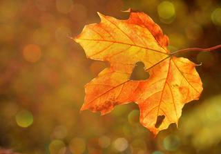 Фото: pixabay.com   Обнаружен признак, что лета в этом году в Приморье не будет