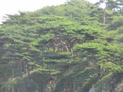Небольшая фирма замахнулась на огромную долю приморского лесфонда