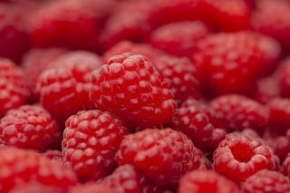Фото: pixabay.com | Опытные садоводы рассказали о подкормке, которая позволит собирать малину ведрами