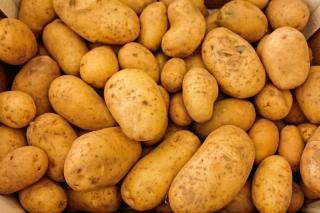 Фото: pixabay.com | Дачникам рассказали, как уберечь урожай картошки от вредителей
