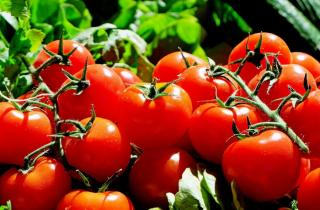 Фото: pixabay.com | Эта подкормка позволит значительно увеличить урожай помидоров
