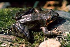 Ферма по выращиванию лягушек и экотакси появятся в Приморье