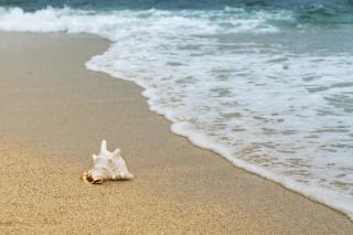 Фото: pixabay.com | «Вот где камеры нужно ставить»: приморцев возмутило то, что натворили на популярном пляже