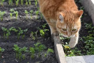Фото: pixabay.com | Дачные секреты: где нельзя сажать помидоры, лук и огурцы?