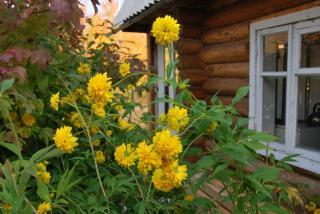 Фото: pixabay.com | Штраф или лишение земли: российским дачникам рассказали, чем грозит невыполнение обязательств