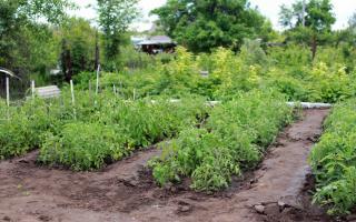 Фото: pixabay.com   Может пропасть весь урожай: названо удобрение, которое следует применять с большой осторожностью