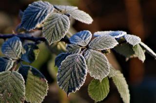Фото: pixabay.com   Метеоролог предупредил о приближающихся заморозках и аномальной жаре