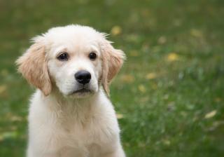 Фото: pixabay.com | Приморские студентки увидели жестокую расправу над щенком