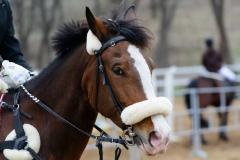 Во Владивостоке пройдет чемпионат Приморского края по конному спорту