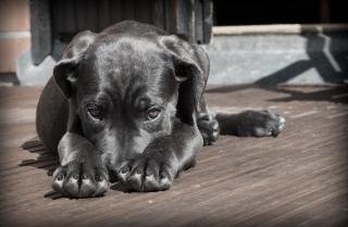 Фото: pixabay.com | В Приморье прокуратура намерена решить ситуацию с бездомными собаками