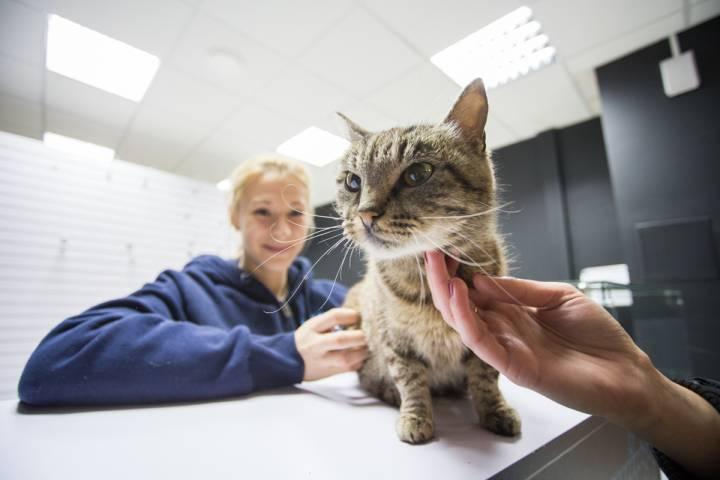 Кошка Матроска оказалась не единственным животным-символом в спорте