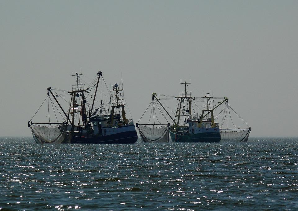 С начала года приморские рыбаки добыли более 243 тысяч тонн минтая