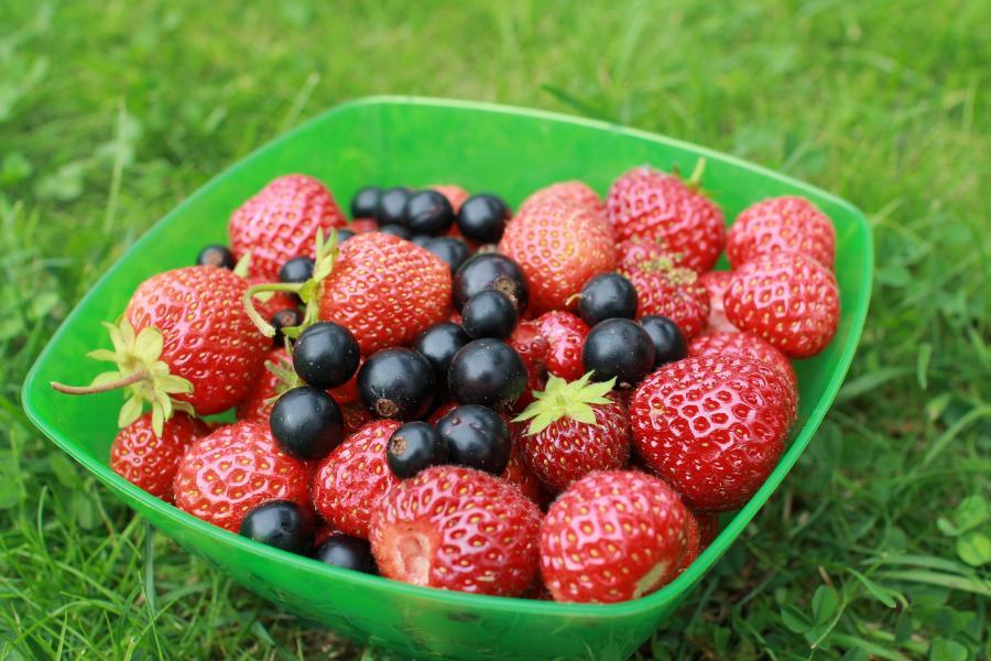 5 популярных дачных ягод