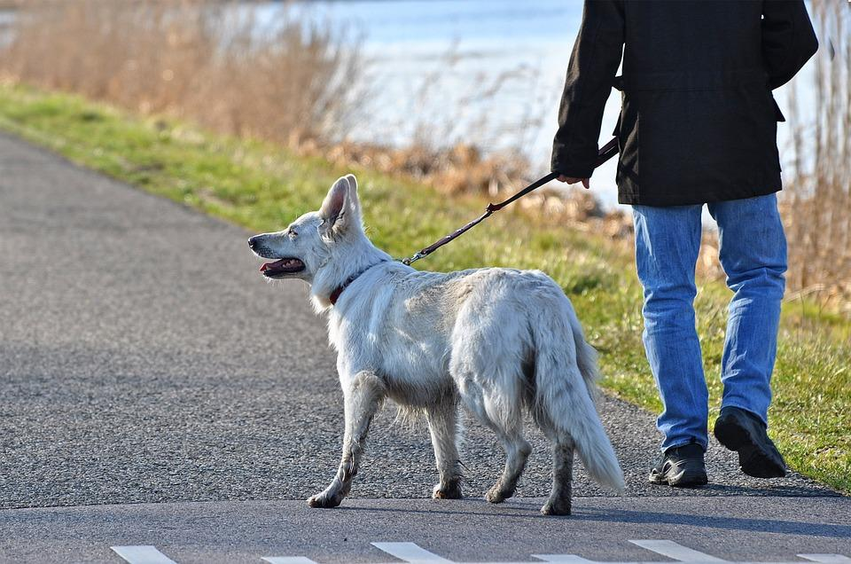Прогулка с собакой закончилась реанимацией
