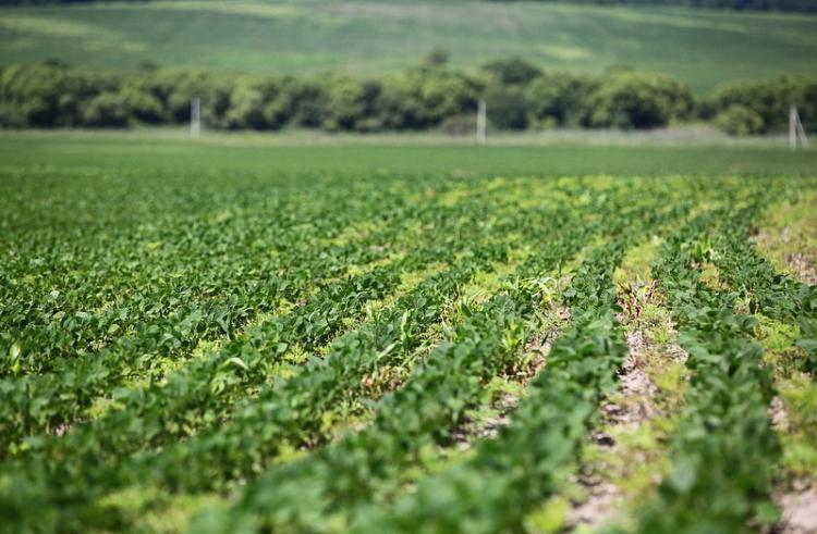 Приморские аграрии перевыполнили план по посеву сои