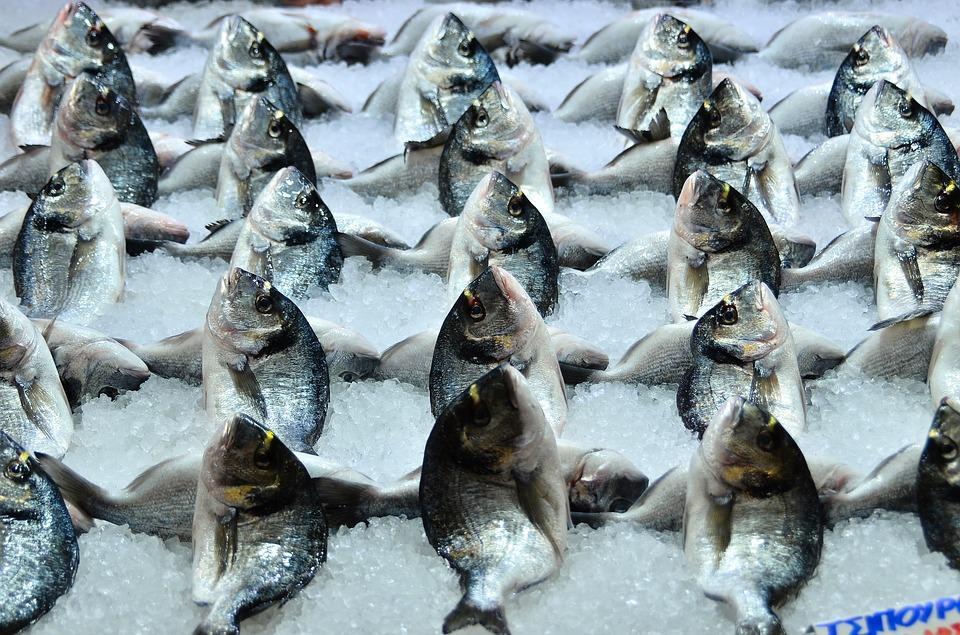 Опасную рыбу обнаружили на одном из складов во Владивостоке