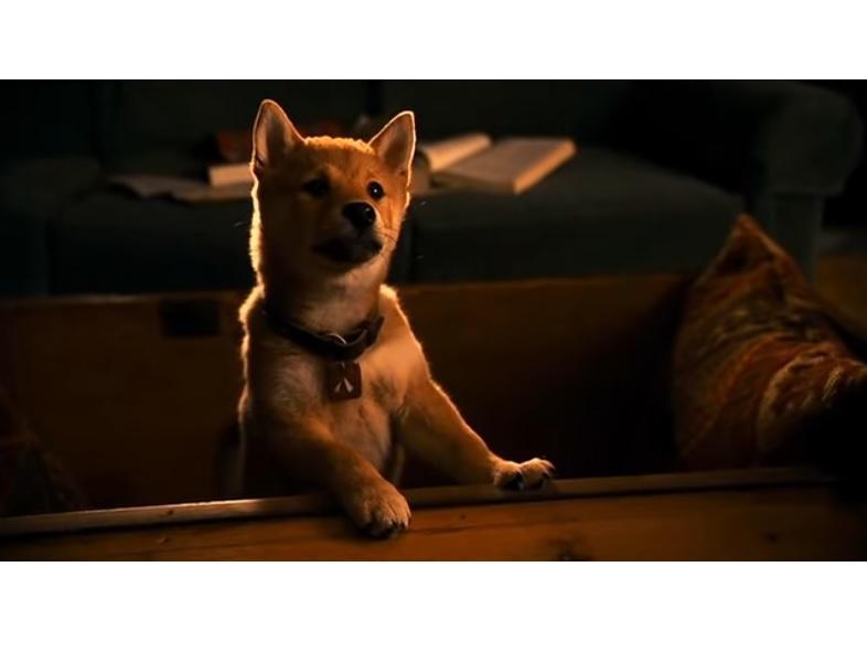 Тест PRIMPRESS: Хатико, Мухтар и другие: как много вы знаете о собаках в кино?