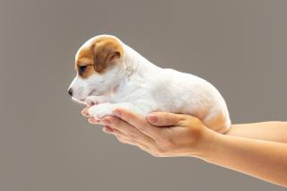 Фото: freepik.com | Приморский дворник может оказаться в тюрьме за убийство щенка Мишки