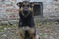Собака Саламандра помогла найти детскую машину в Уссурийске