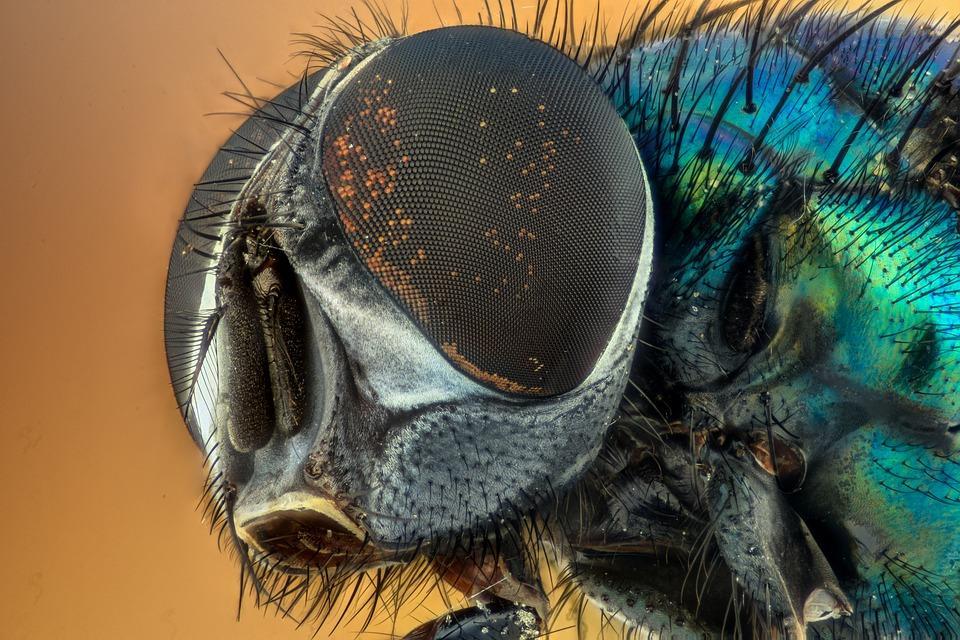 «Их там тьма»: полчища этих насекомых атакуют приморцев