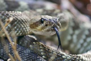 Фото: pixabay.com | «Ого, какая огромная»: гигантская змея приползла в центр города
