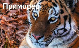 Фото: primorsky.ru | Новый приятный бонус подготовили для владельцев карты «Приморец»