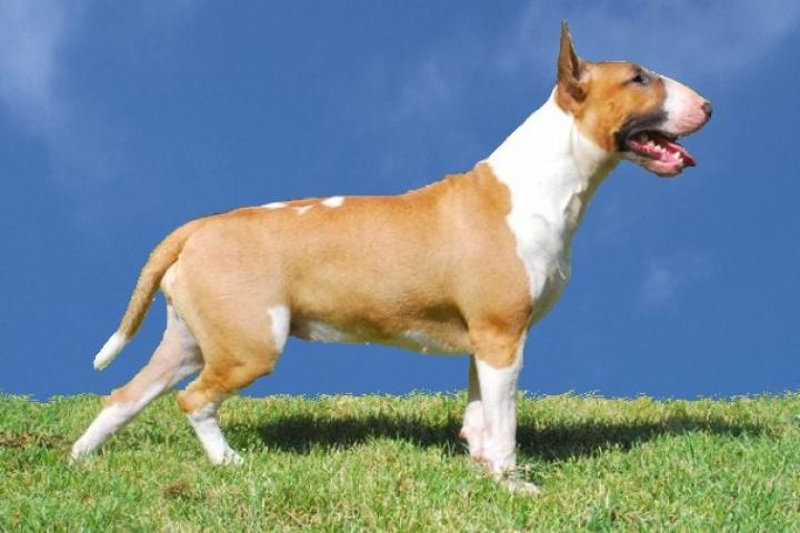 Пять опасных пород собак, которых стоило бы запретить держать в квартирах