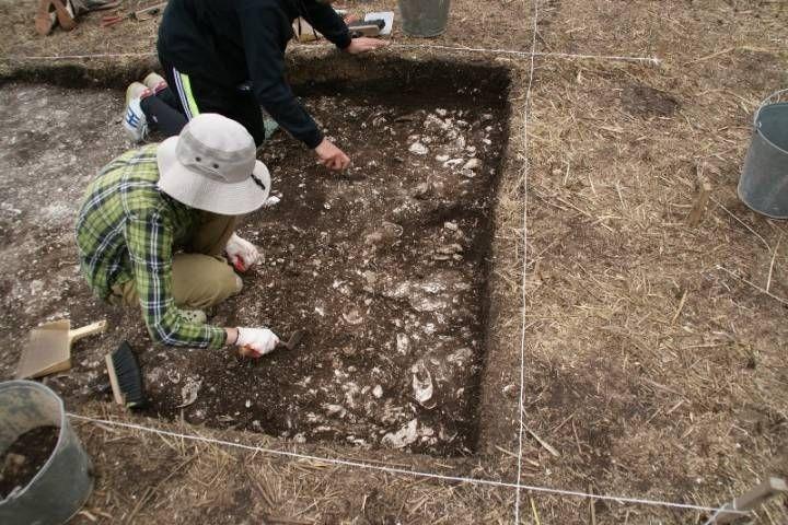 Археологи изДВФУ обнаружили необычайное древнее захоронение наюге Приморья