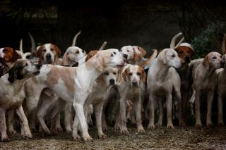 Фото: pixabay.com | Стаи бездомных собак пугают жителей Владивостока