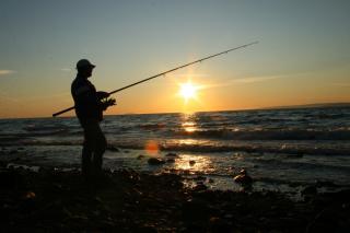 Фото: pixabay.com   «Руками собираем»: тропическая рыба массово выпрыгивает на берег в Приморье