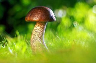 Фото: pixabay.com | Власти готовят удар по тем, кто собирает грибы и ягоды в лесу