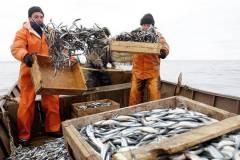 Рыбный рынок в поисках «торговой мафии»