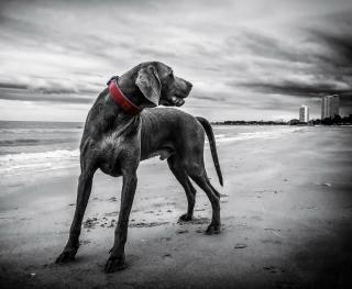 Фото: pixabay.com   «Ужас»: в Приморье собака едва не разодрала ребенка возле магазина