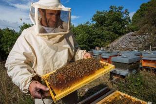 Фото: KONKURENT.RU   В Приморье установят памятник пчеле