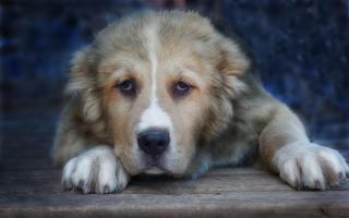 Фото: pixabay.com   Руководитель Госветинспекции Приморья рассказал о преимуществах приютов для безнадзорных животных