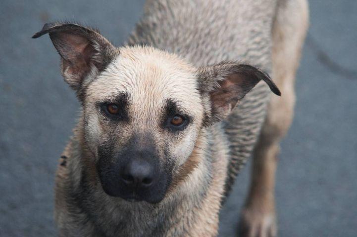 Агрессивные собаки стали нападать на людей на набережной ДВФУ