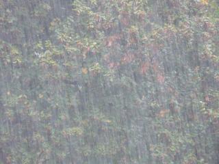 Фото: pixabay.com | Мощный ливень обрушится на Владивосток уже через пару часов