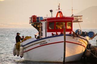 Фото: pixabay.com   «Вот это монстр»: огромного «зверя» из воды поймали рыбаки в Приморье