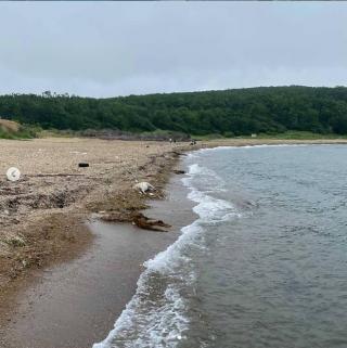 Фото: dpskontrol125rus | «Не с Аскольда ли принесло?». На берегах приморских пляжей появляются тела мертвых оленей