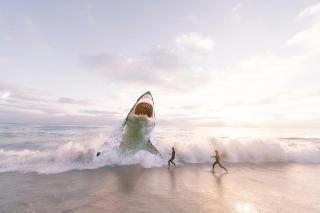 Фото: pixabay.com   5 самых опасных акул в Приморье