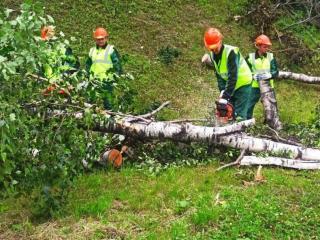 Фото: vlc.ru   Во Владивостоке крупная приморская лесоперерабатывающая компания помогает в уборке аварийных деревьев