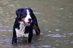 Приморцам запретили брать собак на общественные пляжи