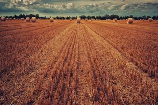 Фото: pixabay.com | В Приморье сельхозпроизводители проводят на полях сезонные работы
